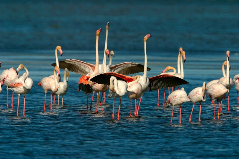 Flamingos on the sea | Giraffa