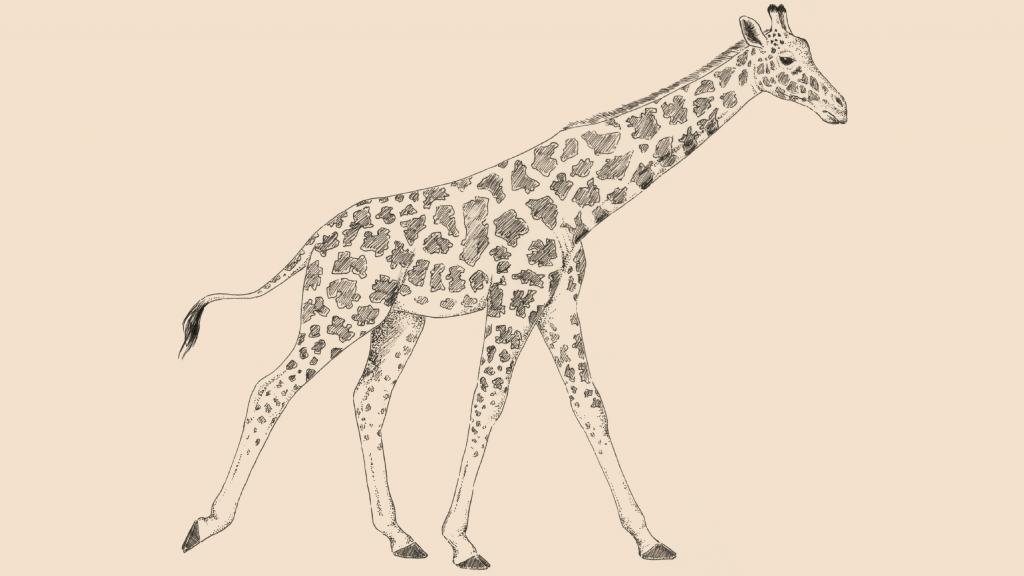 Giraffe illustration | Giraffa
